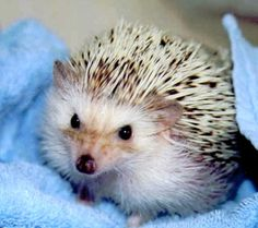 A cute hedgie picture!