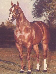 Another photo of Skips Assist. 1981 ch stallion (Skips Assault x Skipema by Son O Skip).