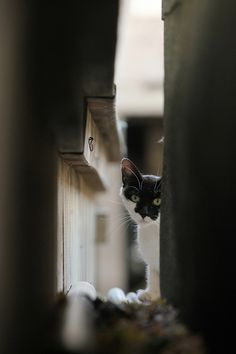 Kitty peeking out