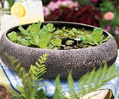 DIY- Container Water Garden. See this project and more tabletop water garden ideas: http://www.midwestliving.com/garden/container/easy-tabletop-water-gardens/