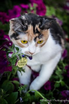 """Mika, adopted from Almost Home Humane Society – Lafayette, IN: """"My adopted pet is Mika from the Almost Home Humane Society in Lafayette, IN."""""""