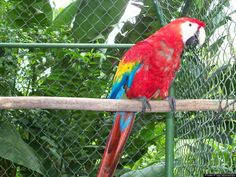 """The Belize Zoo and Tropical Education Center – Belize City, Belize  """"The Best Little Zoo in the World"""" was founded nearly 30 years ago to provide sanctuary for wild animals used in a documentary about tropical forests."""
