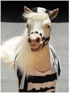"""Debbie G's horse, Aladdin, works as a therapy horse. Debbie says he """"is white with beautiful pale blue eyes,"""" just like Anderson."""