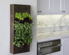 herb living wall - page 44