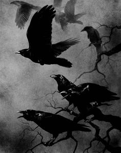 Lovely. the raven, living room art, the crow, a tattoo, bird of paradise, birds, crows, black, ravens