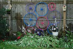 Recycled bicycle wheels are the backdrop for my garden fence.