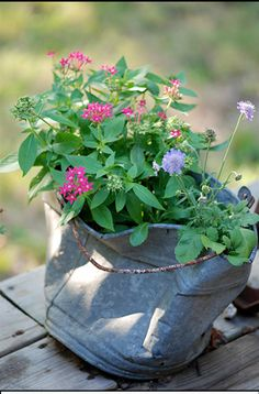 Old galvanized pail has been repurposed as a planter.