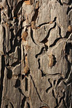Tracks on a dead tree
