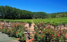 Navarro Winery in California...  We went to this Winery and their wines are perfect!