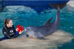 Some Valentine's Day themed enrichment for our bottlenose dolphins. #CaringTogether