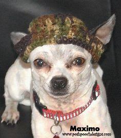 crochet beani, small dogs, crochet pattern for dogs, dog pattern, doggi cloth, duck, crochet corner, camo dog, dog hat
