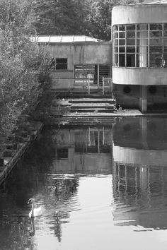An abandoned pool in Hofstade, Belgium, is now swan lake.