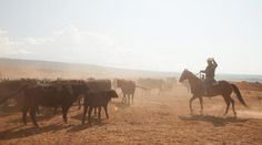 Episode 3: Cattle-Wrangling on a Real Working Ranch