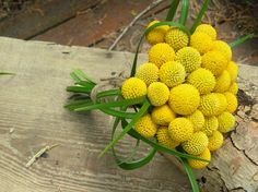 Crapsedia (commonly known as Billy Ball) bridesmaid bouquet~Stems Flower Shop.