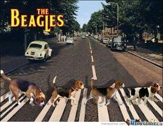 The Beagles...She loves you yeah, yeah, yeah.