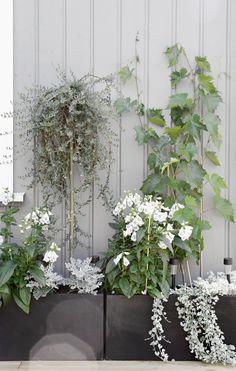 Plants on terrace, stylizimo