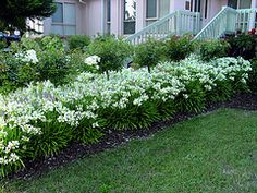 Landscaping ideas on pinterest drought tolerant for Low maintenance flowers for flower beds