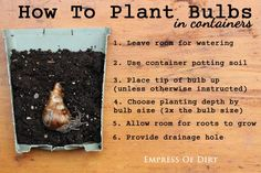 How to plant bulbs in containers | plant your spring-flowering bulbs now! | empress of dirt on #ebay Gardens Ideas, Gardens Guru, Diy Gardens, Cottages Gardens, Creative Gardens, Spring Flow Bulbs, Gardens Charmer, Gardens Growing, Favorite Tutorials