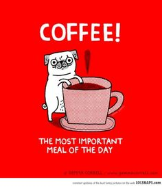 @K M a pug with coffee