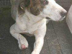 PLEASE HELP....Homeless, poisoned, shot, leg caught in trap and pregnant... | Pet Expenses - YouCaring.com