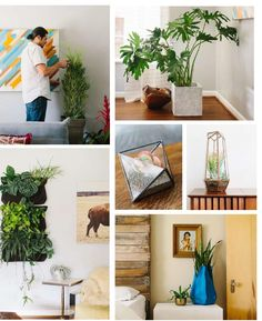 great article on plant care #ClippedOnIssuu from Bungalow Magazine Spring 2014