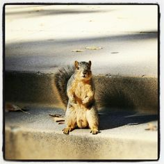 Only in #LA! #Squirrels pose for the #camera :) #UCLA #campus #fun #tgif