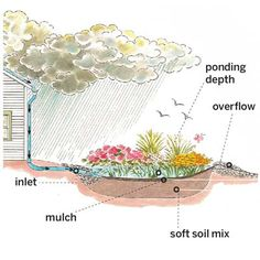 More than pretty front-yard flower beds, rain gardens are designed to filter and divert rain runoff to keep waterways pollution-free.  See our super gallery for how to create your own. | Illustration: Rodica Prato | thisoldhouse.com