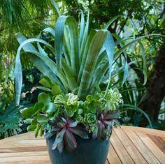 Michelle Derviss l Derviss Design l Fine Gardening Magazine