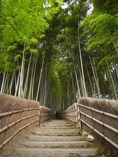 The Bamboo Forest Trail near Kyoto, Japan (by -sou-).