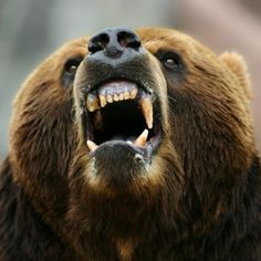 Attacked by Bears?   9 Craziest Excuses for Being Late