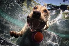 Funny Underwater Dogs