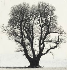 Patrick Van Caeckenbergh   Drawing of Old Trees, 2010  pentel