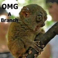 Omg a branch