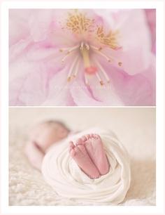 Bellini Newborn