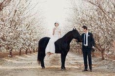 wedding + almond orchard + horse.