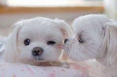 cute pupssss