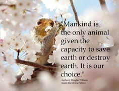 Mankind is the only animal given the capacity to save Earth or destroy Earth. It is our choice. ~ Anthony Douglas Williams