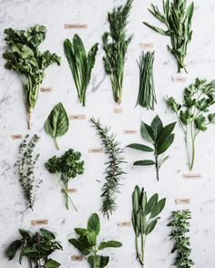 Herbs / styling and