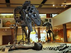 Skeletons, fossilized skin, eggs, footprints, state-of-the-art graphics and beautifully realistic sculptures present dinosaurs from the Four Corners region and throughout the world. You will see exhibits which show how dinosaurs were distributed globally, as well as the latest in dinosaur skin research. Enjoy the displays of dinosaur eggs from around the world and the baby Protoceratops and Maiasaura sculptures. The museum also contains a history hall of Hollywood dinosaur movies with movie memorabilia from the silent classics all the way through the high tech dinosaur movies of today. 435-678-3454, www.dinosaur-museum.org