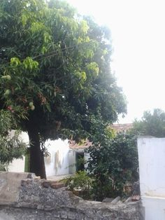 Backyard of my grandpa's house.