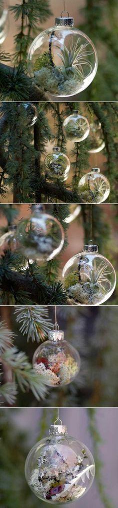 DIY Ornaments With Living Plants live plant, diy ornaments