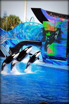 Shamu Whale show at Sea World Orlando
