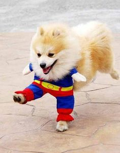 I know what im getting Bacardi for his next Halloween costume!  =)
