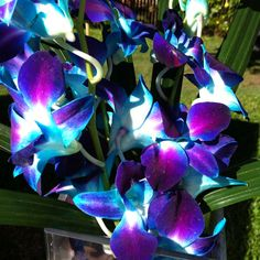 Singapore orchids blue purple and teal