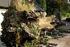Sculpture / garden | The Wood for the Trees | muf architecture / art / on TTL Design