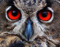 Beautiful owl eyes