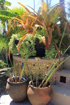 figs flowers food: NAPLES BOTANICAL GARDENS - FLORIDA