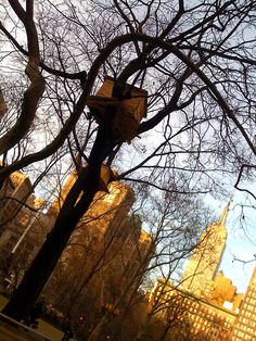 Madison Square Park Treehouse by randygibson, via Flickr