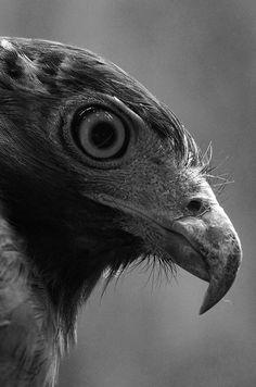 ►Mirada de águila‼