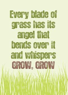 Every blade of grass has its angel that bends over it and whispers GROW, GROW - Talmud